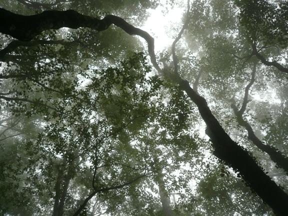 背の高い木々。