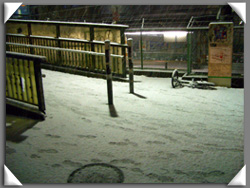 店前の雪化粧1