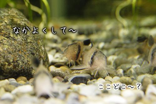 panda_002.jpg