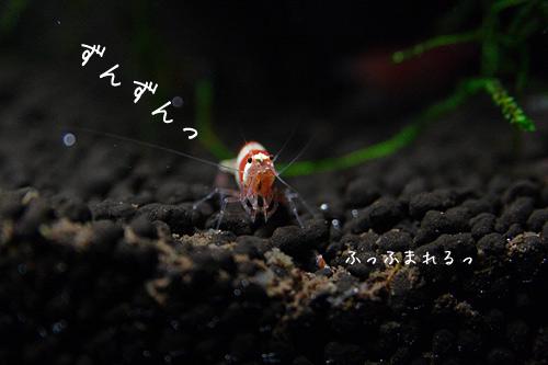 redbee_006.jpg
