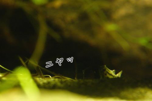 syuwa_001.jpg