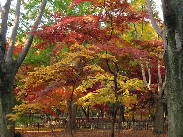 神代植物公園2009秋1
