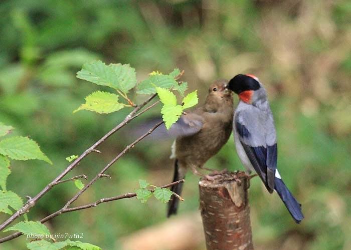 09drama_bird_09.jpg