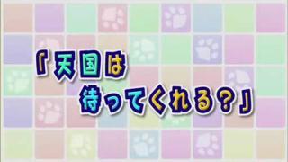 にゃんこい12(終).flv_000129963