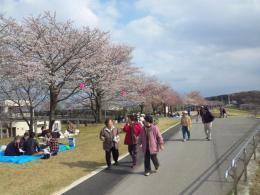 鬼怒川ゆうゆうパーク桜並木です