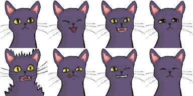 blackcat_exp1