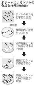 ゲノムの合成と増殖