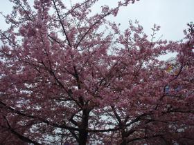 さすがに花見にはまだ寒いこの時期ですが…