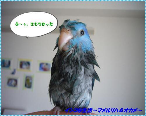 P1080489_convert_20130819142358.jpg
