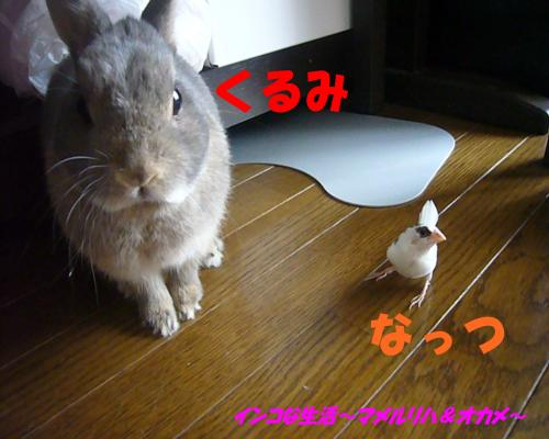 P1100008_convert_20130830071909.jpg