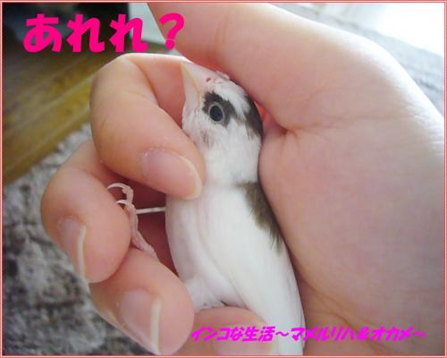 P1100046_convert_20130830072134.jpg