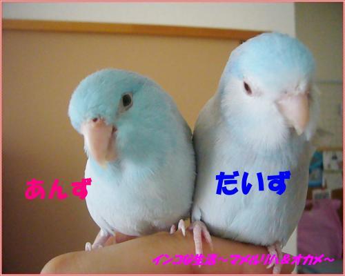 P1100305_convert_20131023113939.jpg