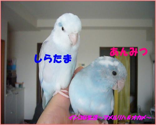 P1100309_convert_20131023114056.jpg