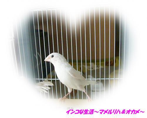 P1100312_convert_20130914123401.jpg