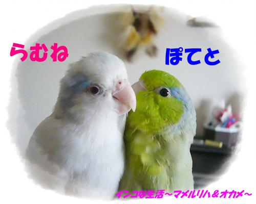 P1100342_convert_20131023114157.jpg
