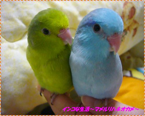 P1100830_convert_20131124215147.jpg