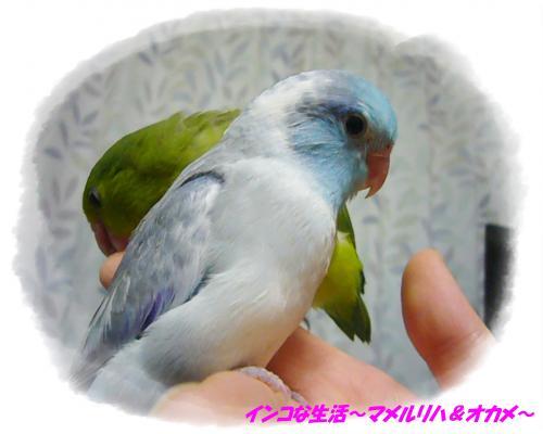 P1100876_convert_20131124214716.jpg