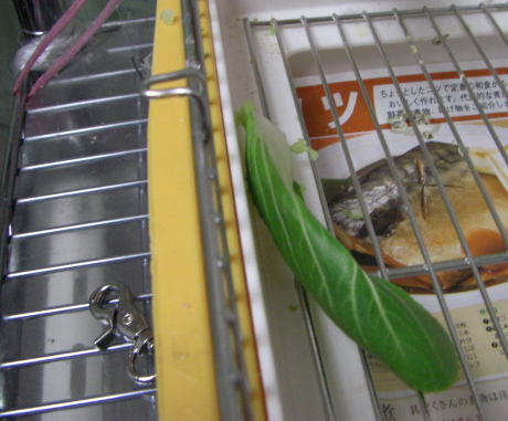 チンゲン菜葉っぱ