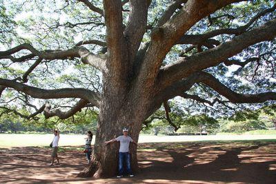 この木なんの木5