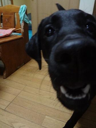 momo2_20120212222804.jpg