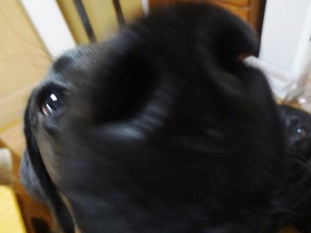 purumomo3_20111219232600.jpg