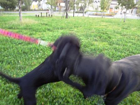 purumomo8_20111014212055.jpg