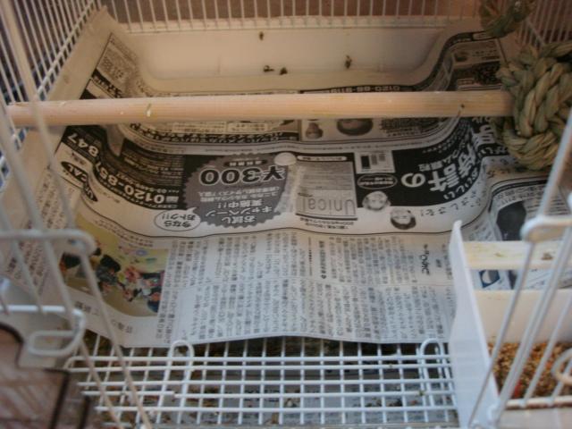 新聞でガード