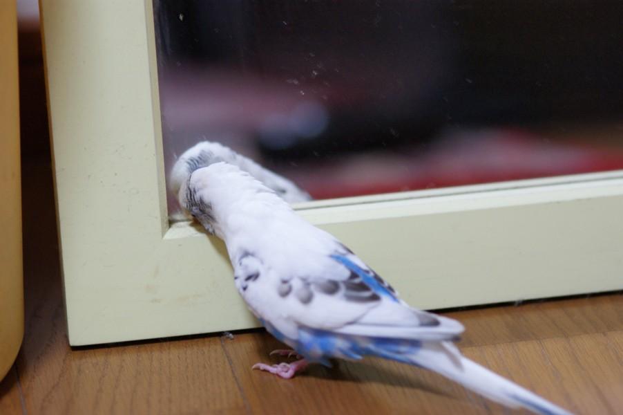 一人(鳥)で・・・