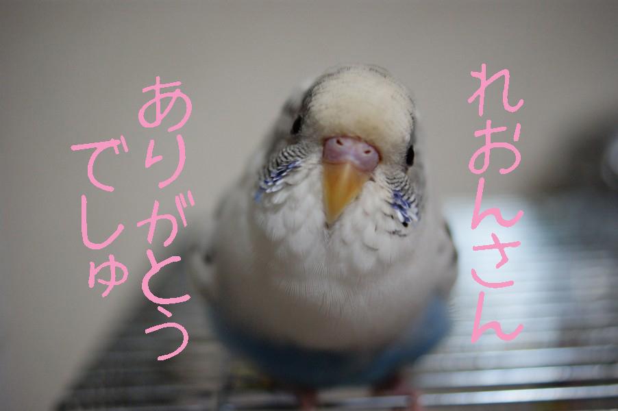 ピーちゃんより