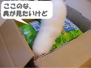 健太郎の荷物1001-3