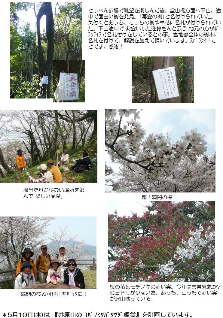 2012.04.05花見2