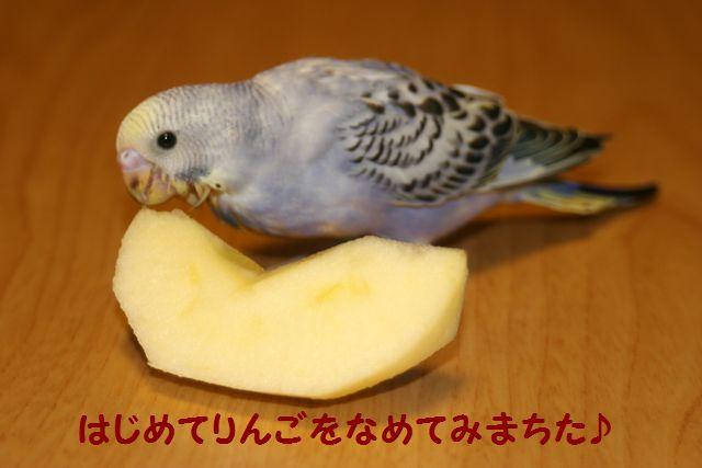 IMG_3419りんご