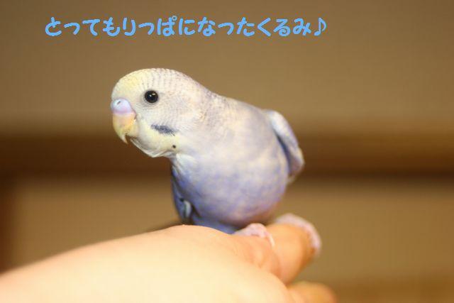 IMG_3793りっぱ
