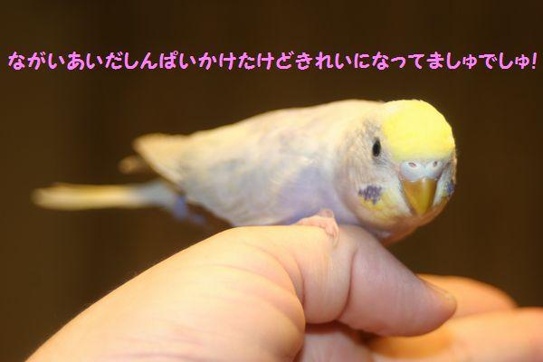 IMG_4091きれい☆
