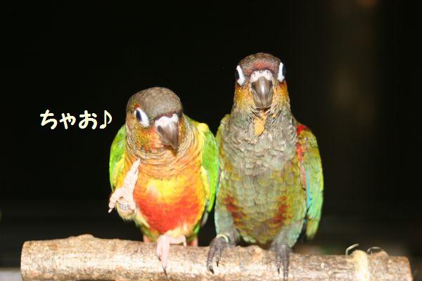 IMG_5083ちゃお