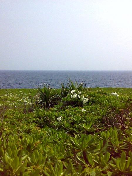 伊江島リリーフィールド公園