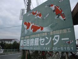 錦鯉センター
