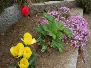 岩手の庭+013_convert_20110426221947