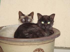 猫ちゃん+003_convert_20110509234351