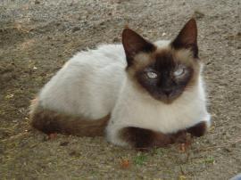 猫+008_convert_20110509234621