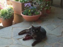 猫ちゃん+017_convert_20110509235127