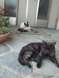 猫ちゃん+013_convert_20110509235503