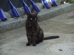 猫ちゃん+001_convert_20110509235701