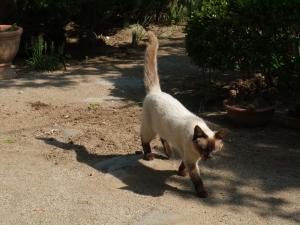 猫ちゃん+002_convert_20110515210027