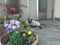 猫ちゃん+007_convert_20110515222313
