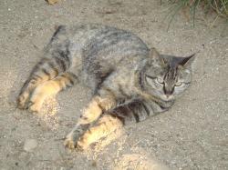 猫+011_convert_20110515222350