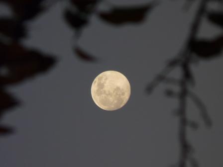 モンチッチ海岸 月