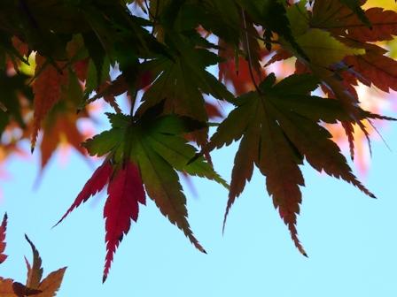 松山総合公園 紅葉 2