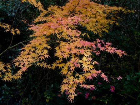 松山総合公園 紅葉 3