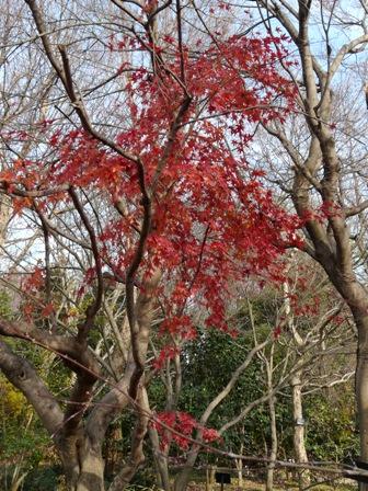 森の交流センター 紅葉